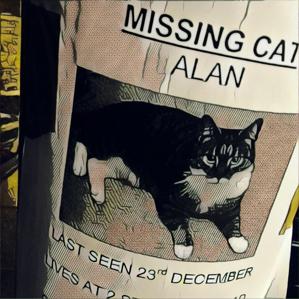 A cat named Alan