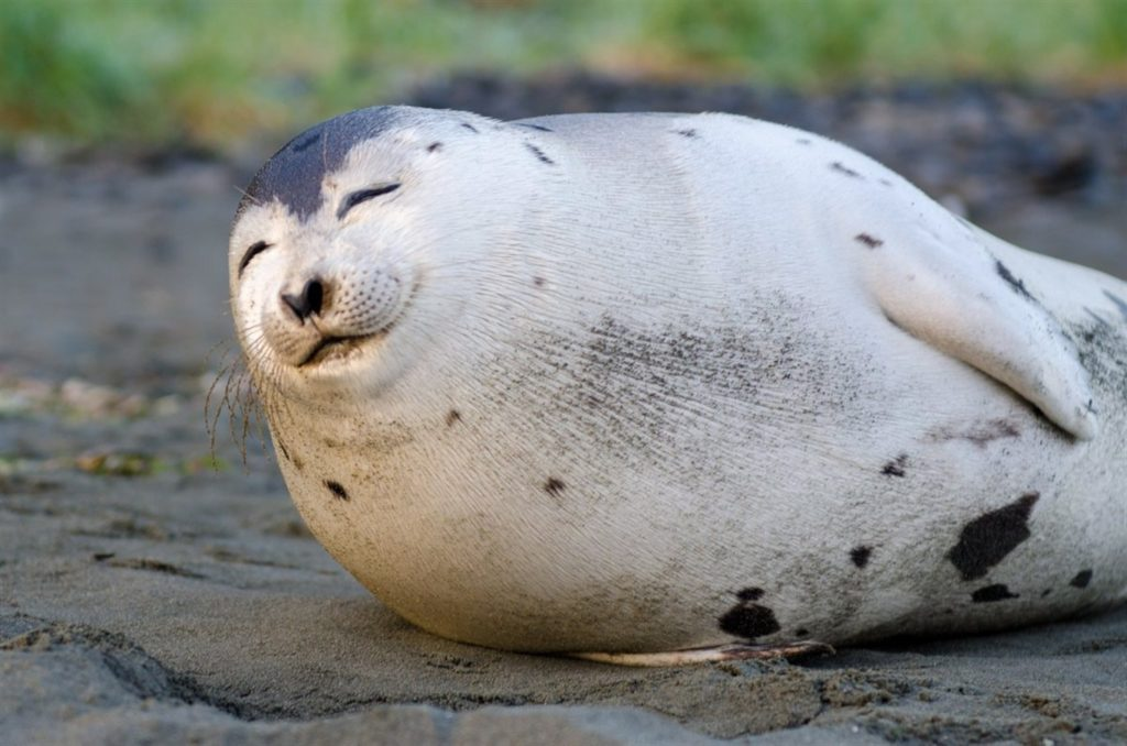 An excellent seal